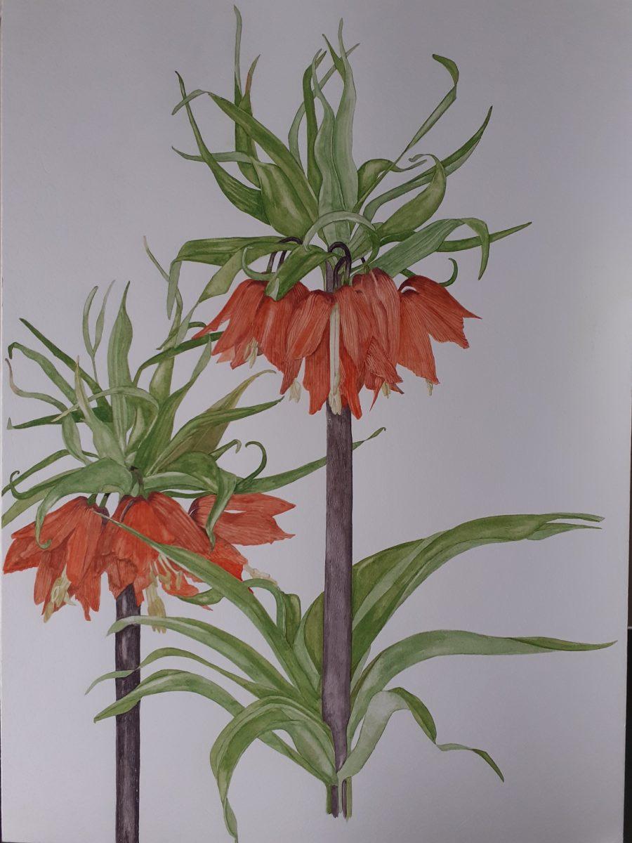 Janetaylorplants