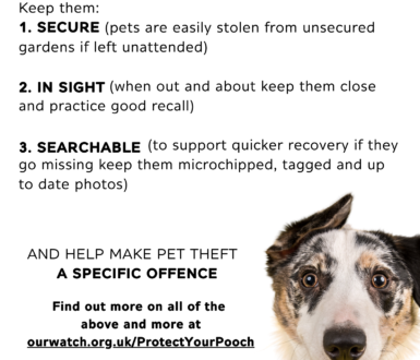 Protect Your Pooch Poster
